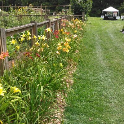 Work at Rutgers Daylily Garden