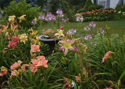 Daru's Garden 1